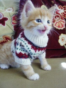 kitten-sweater